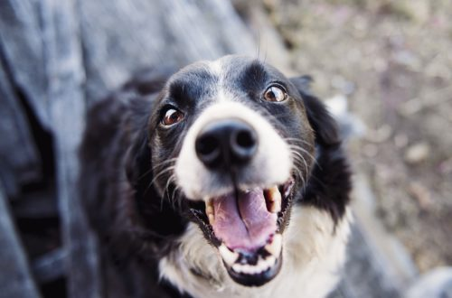 cute dog showing teeth